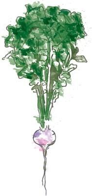 Green, I Love You, Greens | Illustration by Matt Ferebee