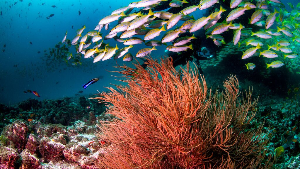 A reef in the Maldives | Photo: Tchami, some rights reserved