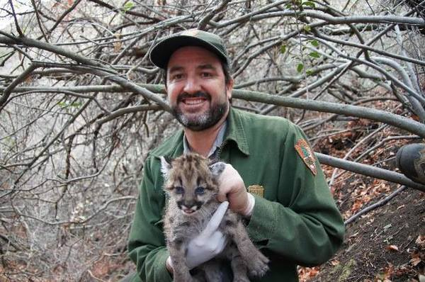 biologist-holds-Puma-12-2-13-thumb-600x398-64975