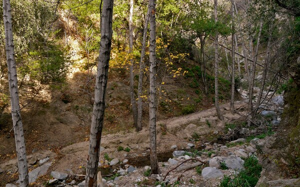The Hahamog'nas walked along the Arroyo Seco through the canyon to reach the other side of the mountains. Photo by Yosuke Kitazawa   KCET