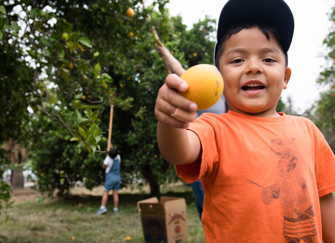 Boy with Orange, Food Forward