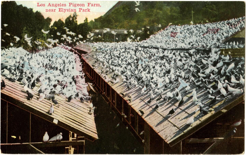 Pigeon Ranch postcard, circa 1910