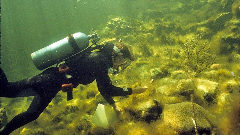 Gaie Alling weeds a coral reef. | Photo: Phil Dustan