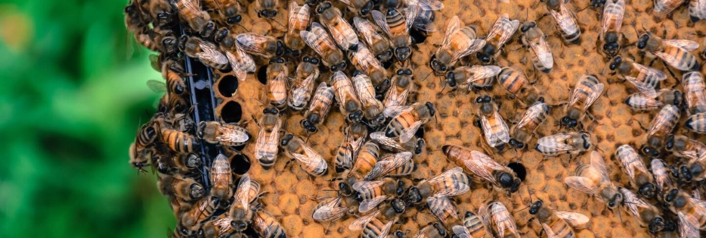 L.A. Beekeeping