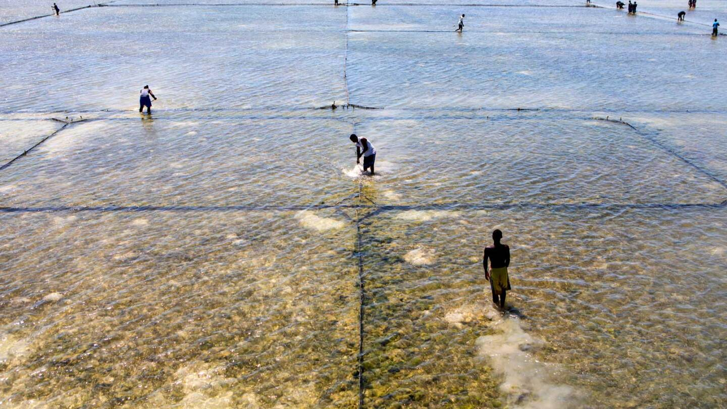 People working on a sustainable sea cucumber farm in Madagascar.  | Nicky Milne/Thomson Reuters Foundation