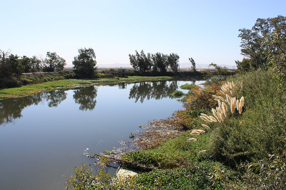 River with Low Riverbanks