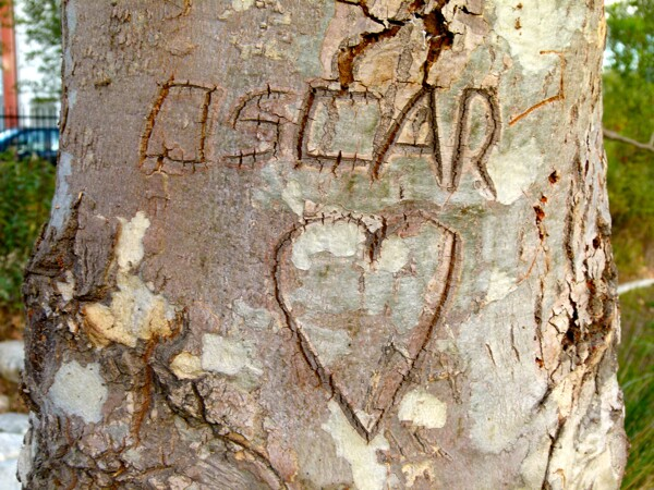 --While older kids scratch love notes for one another in oak trees.