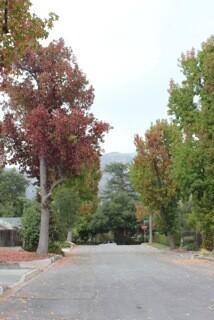 Street Losing Trees