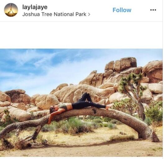 Person lounging on Joshua tree |  Image: via Instagram