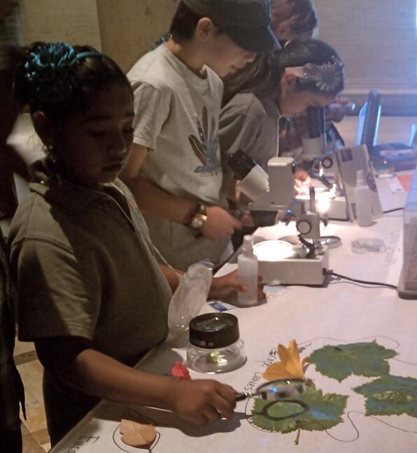 Kids examine plants