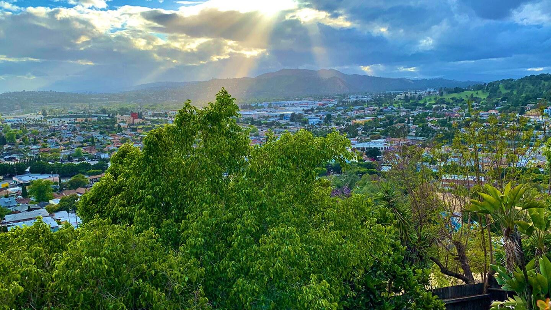 The sun peeks through clouds to shine on a lush, green tree.