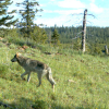 oregon-wolves-3-6-14-thumb-600x338-70092