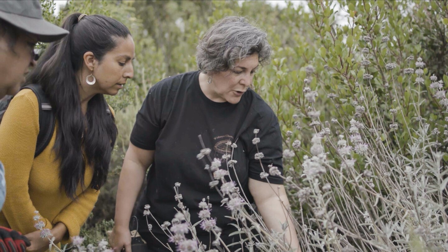 "Julie Cordero-Lamb leads a plant walk in Santa Barbara. | Still from ""Tending Nature"" episode ""Holistic Healing with the Syuxtun Collective"""