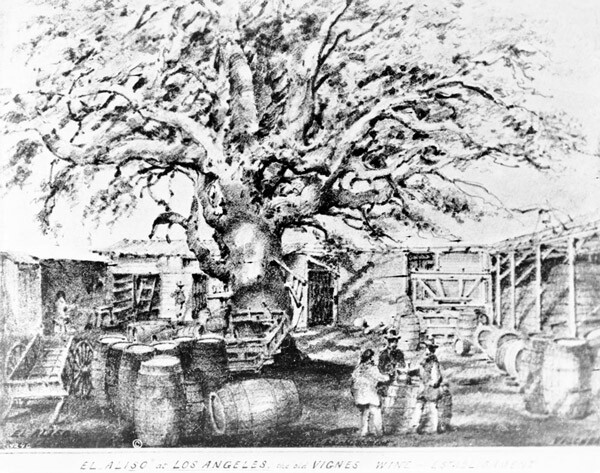 Edward Vischer's pre-1875 drawing of El Aliso in the courtyard of the Vignes winery. Courtesy of the Title Insurance and Trust / C.C. Pierce Photography Collection, USC Libraries.