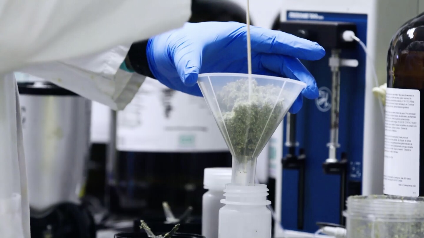 "Marijuana being processed at lab by technician | Still from SoCal Connected's ""Cannabis Country"""