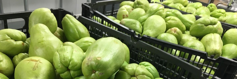 zero waste produce for LA Feeding The 500