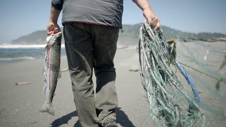 pergish-salmon-blood-10-19-16.jpg
