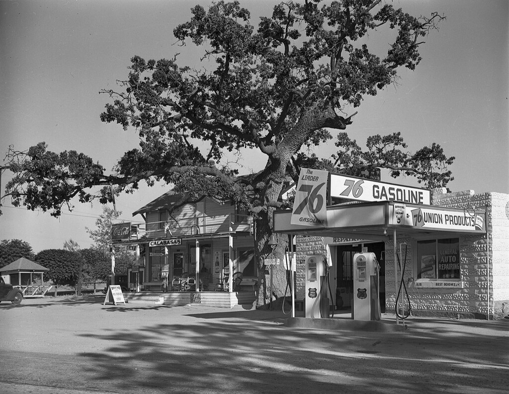 """View of the """"Hanging Tree"""" in Calabasas, Los Angeles County, 1939. 