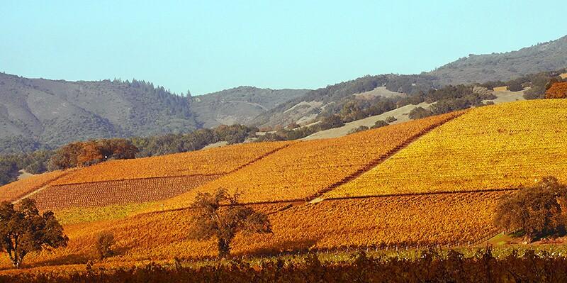 sonoma-vineyard-9-10-16.jpg