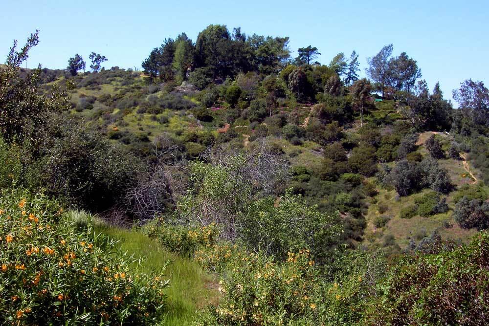 Amir's Garden due south | Courtesy of Kristin Sabo