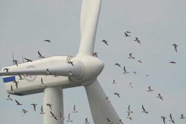 birds-wind-turbine-2-5-14-thumb-600x401-68108