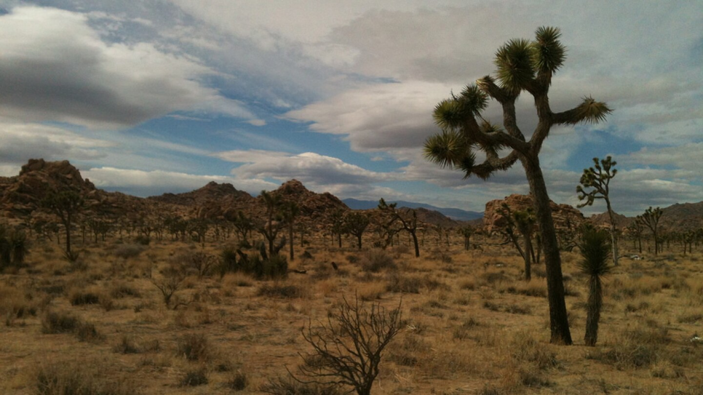 In Joshua Tree National Park | Photo: Chris Clarke