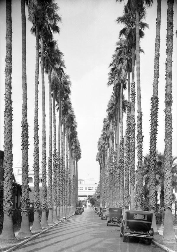 palm_drive_los_angeles_1930.jpg