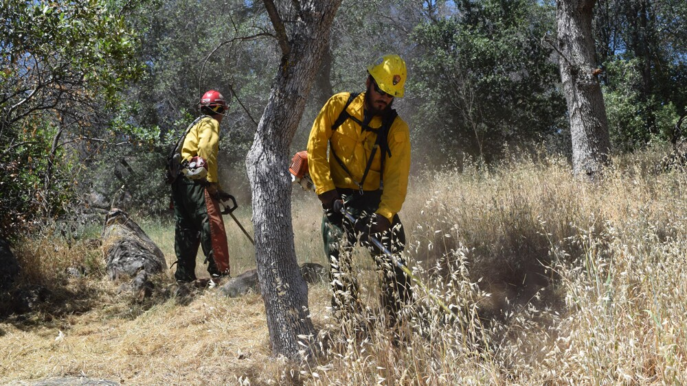 National Parks fire crew at Ash Mountain working to remove grass manually in some places deemed less suitable for burning | Photo: National Park Service