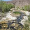 amargosa-river-1-7-15-thumb-630x472-86122