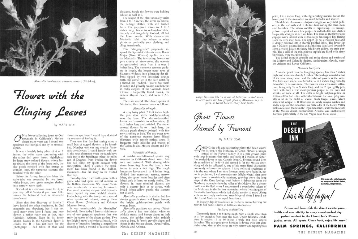 Desert Magazine articles by Mary Beal