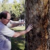 Jerrold Turney, a plant pathologist for L.A. County, examining the health of a tree in a park