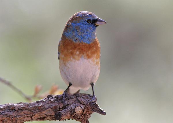ivanpah-bird-kill-may-2014-06-17-thumb-600x427-75666