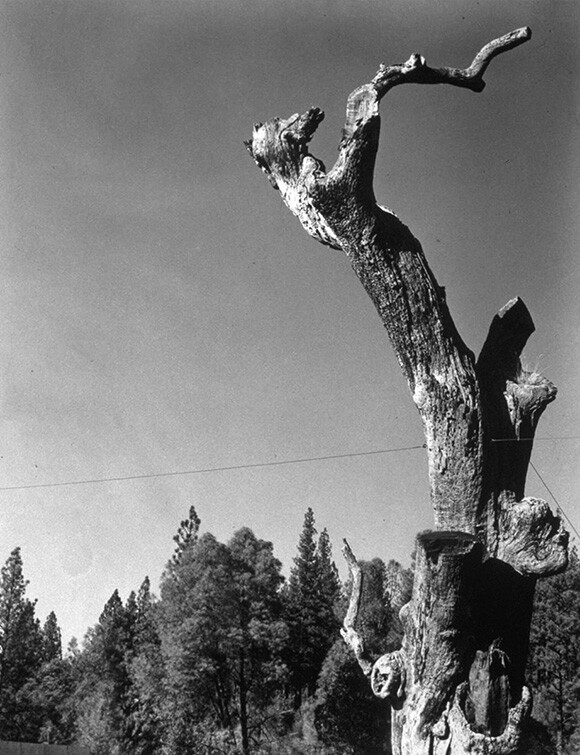"""""""Hangmans Tree"""" (view from the road). 