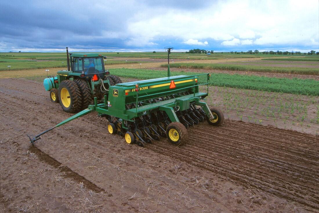 Planting Foxtail Millet