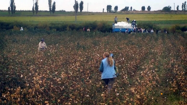 Uzbek Cotton Campaigner Arrested