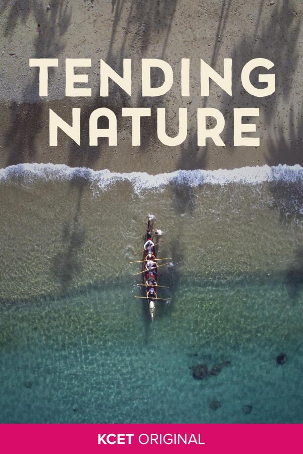Tending Nature show poster