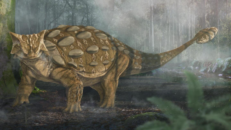 An illustration of an Ankylosaurus.