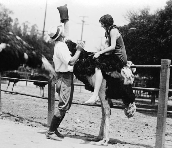 A woman rides an ostrich at Lincoln Heights' Luna Park Zoo. Courtesy of the Title Insurance and Trust / C.C. Pierce Photography Collection, USC Libraries.