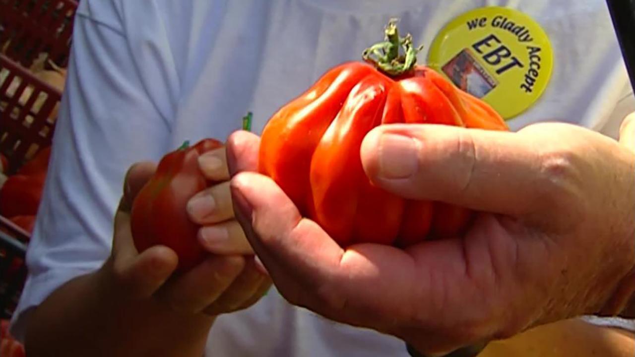 visiting tomatoes