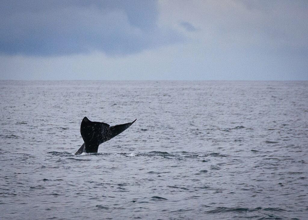 whale-fukushima-3-7-16.jpg