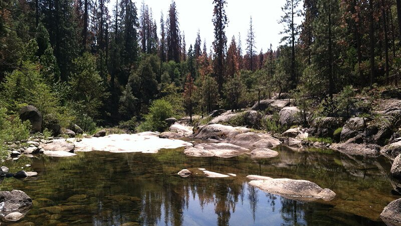 Dense forest on Dinkey Creek | Photo: Jared Dahl Aldern