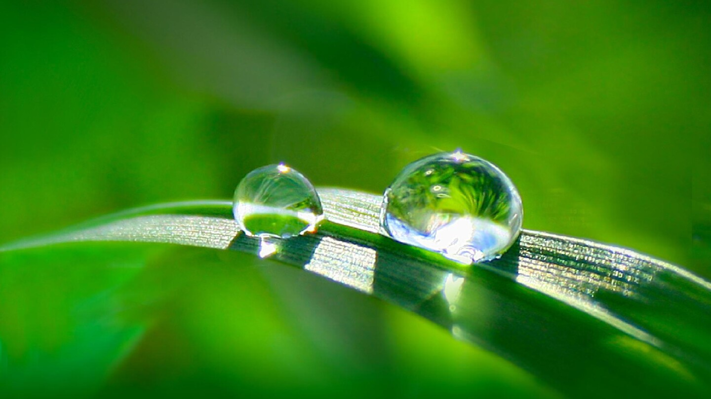 """Two droplets of water rest on a blade of grass. 