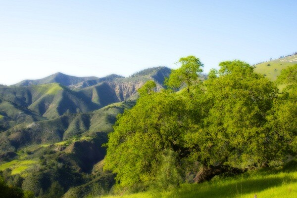 Scenery in the Figueroa Mountain area of Los Padres National Forest