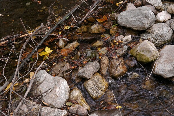 Depending on the time of year, plenty of water flows through the canyon. Photo by Yosuke Kitazawa   KCET