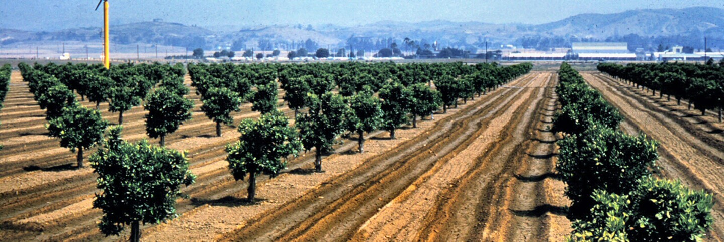 Placentia citrus grove (cropped for header)