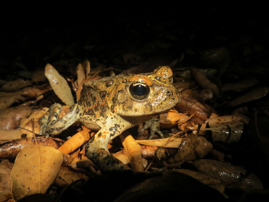 toad_night_solo.jpg