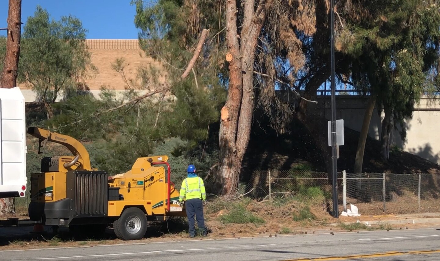City worker near wood chipper, branch of tree falling in front of him