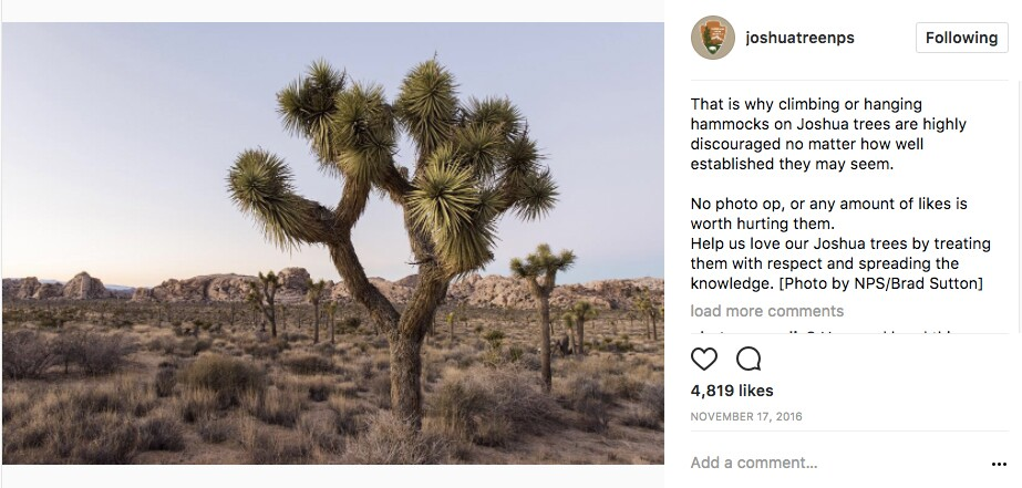 Joshua Tree National PArk's Instagram account explains about hammocks | Image: via Instagram