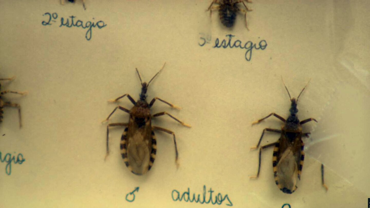 image of assassin bugs