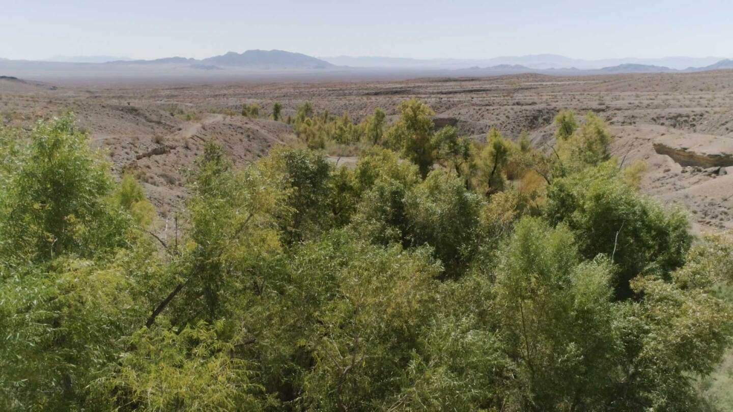 "Lush greenery growing in Bonanza Spring.  | Still from ""Tending Nature"" episode ""Preserving the Desert with NALC"""